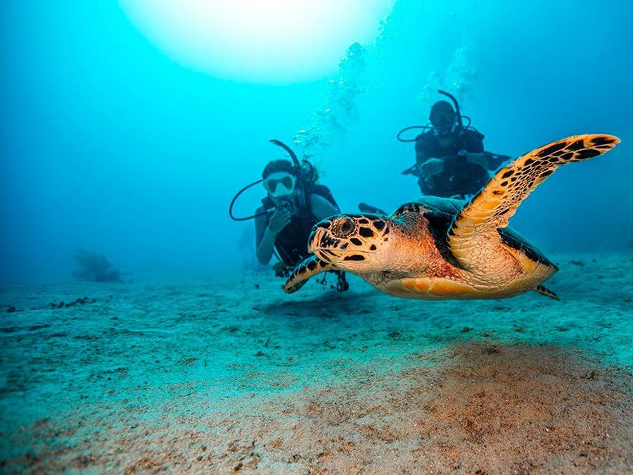 OWD (Open Water Diver) PADI